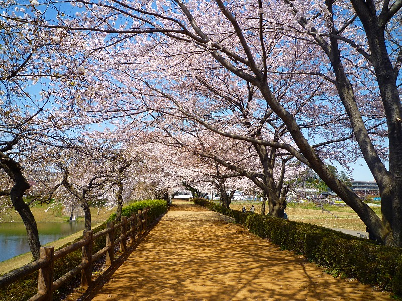 http://www.kawagoe.com/ichige/decor-blog/P1000552.jpg
