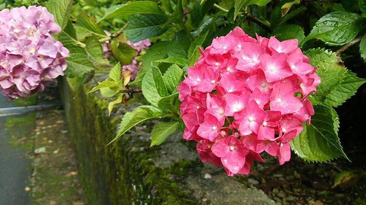 http://www.kawagoe.com/ichige/ichige-blog/10473686_10204396745067033_547794682_o.jpg