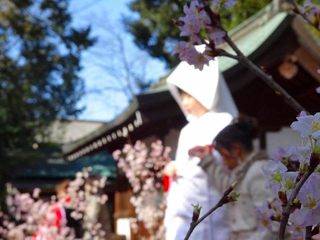 http://www.kawagoe.com/ichige/ichige-blog/333.jpg