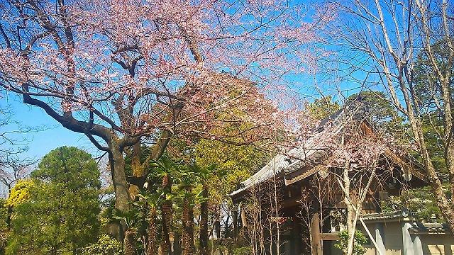 http://www.kawagoe.com/ichige/ichige-blog/803960_10200939736963991_423881613_n.jpg