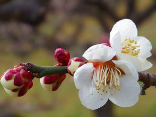 http://www.kawagoe.com/ichige/ichige-blog/img_ogose09_o120305-thumb-320x240-7404.jpg